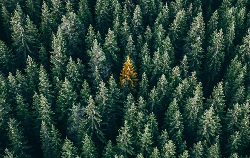 Όψη δάσους από πάνω