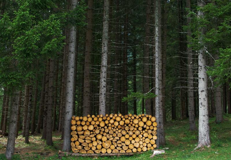 Μετριασμένη κοπή δέντρων